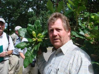 Tony Kirkham with Quercus crassifolia