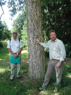 Shaun Haddock (left), Tony Kirham (right), Quercus variabilis (centre), planted 1909 (Eike Jablonski)