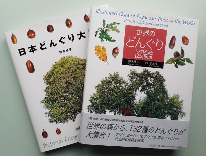 Illustrated Flora of Fagaceae Trees of the World