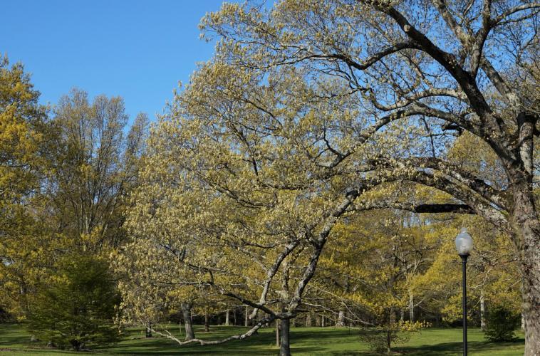oak_park.jpg