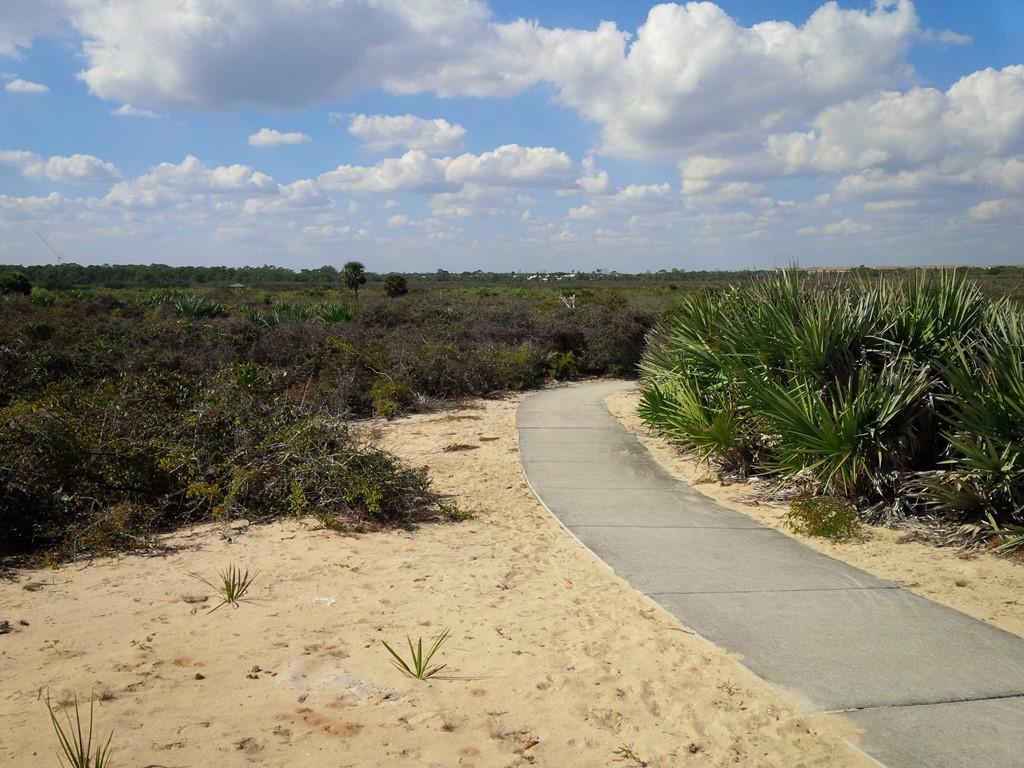A Neophyte Revisits The Florida Oaks International Oak