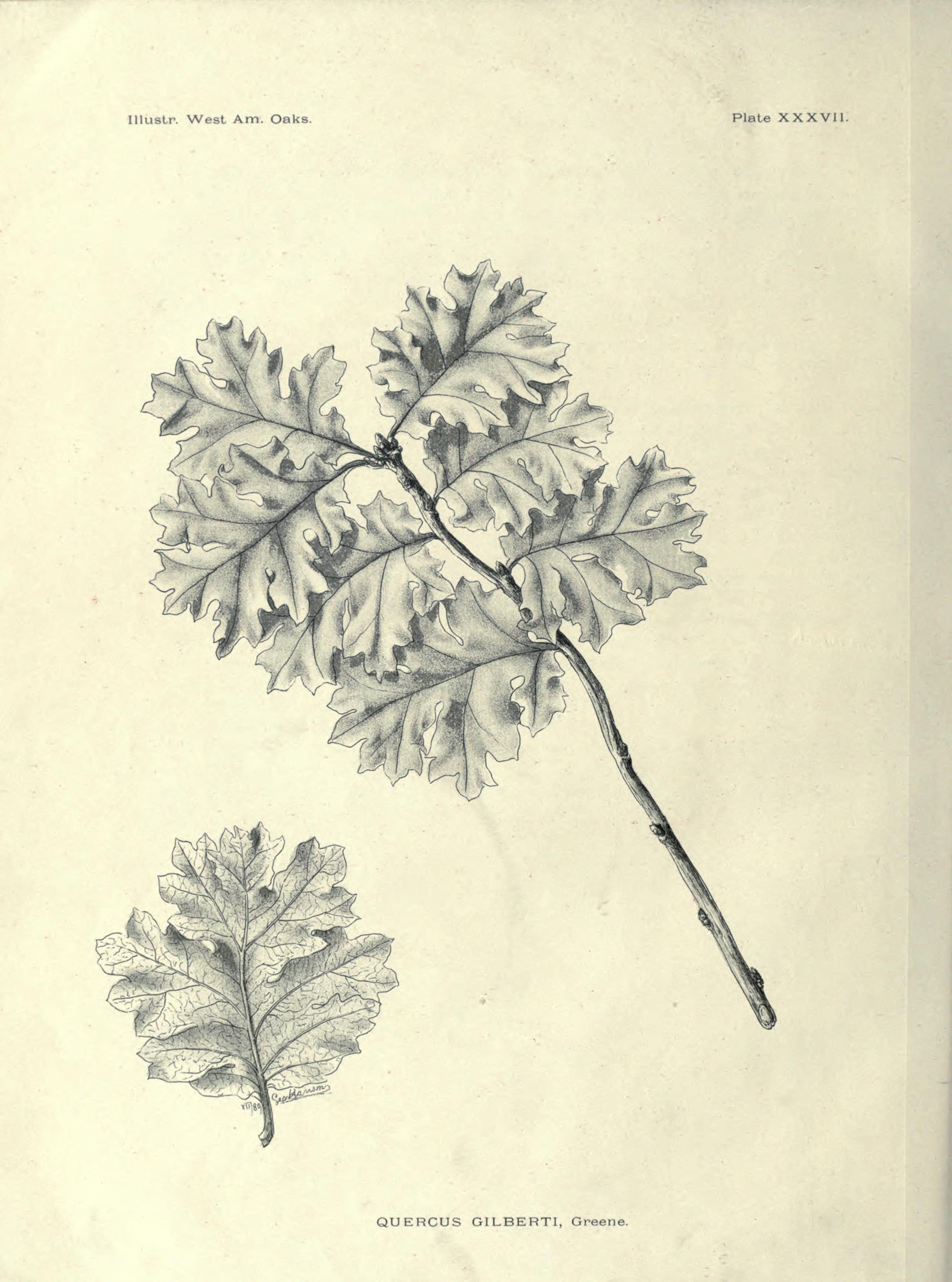Mysterious Hansen Name Unveiled | International Oak Society