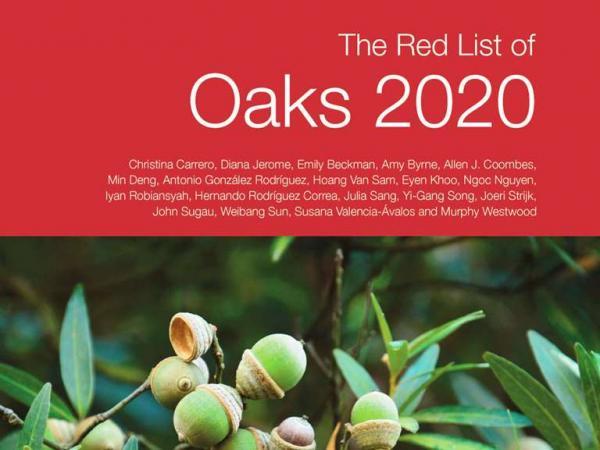 Red List of Oaks 2020