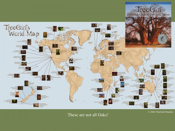 treegirl-ios-slide02.jpg