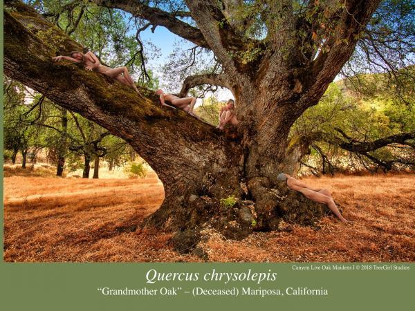 treegirl-ios-slide06.jpg