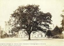 Byron's Oak