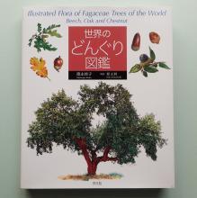 Keiko Tokunaga's Illustrated Fagaceae