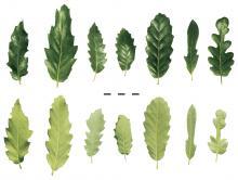 leaf_comparison.jpg
