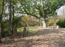Sacred Oak in Oley Valley