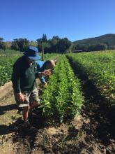 Seedlings examined by Oak Interest Group